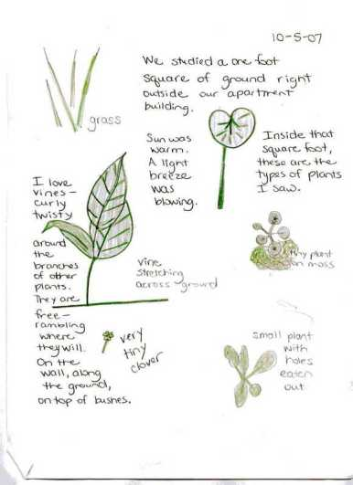 nature journal example 2