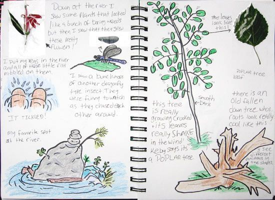 nature journal example 3