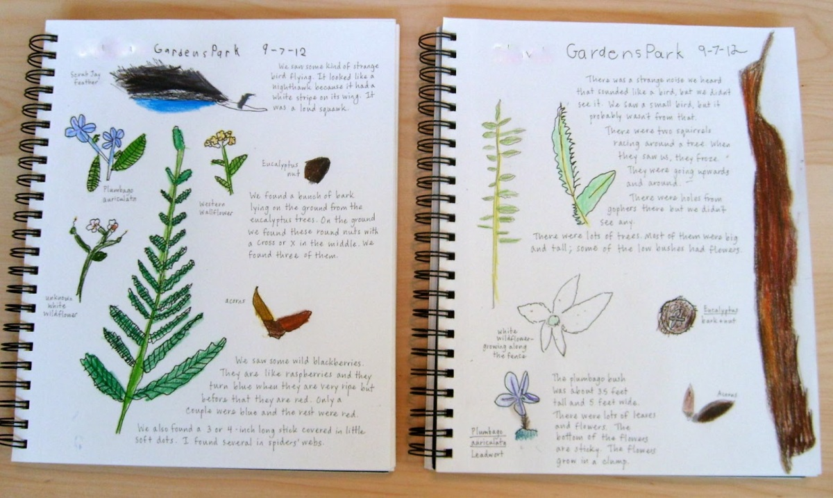 nature journal example 4